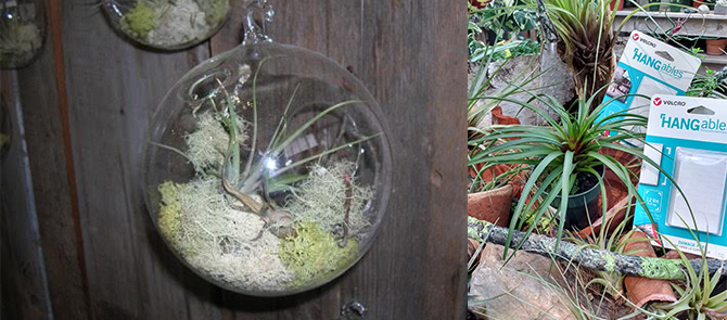 Charlie Nardozzi-Indoor Gardening with Air Plants
