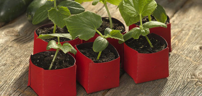 Velcro® Brand Peel Away™ Seed Pot Available at Gardener's Supply