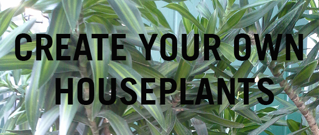 Create Your Own Houseplants
